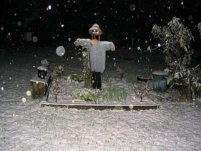 More snow in garden at Blackheath