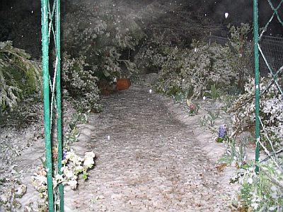 Snow in garden at Blackheath