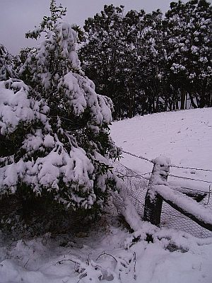 Tree covered in Wet snow at Shooters Hill